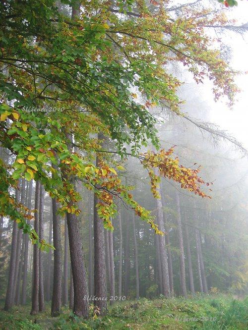 Podzimní IV