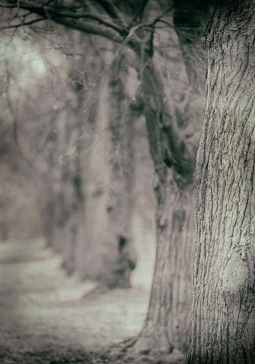 Krajina se starými stromy 4 - fotografie 30x20 cm