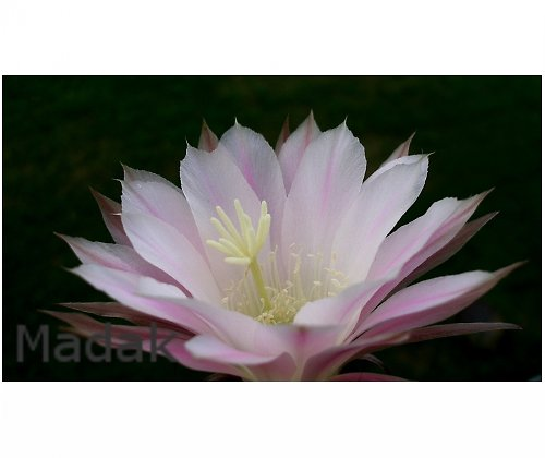 Květ - výprodej - sleva z 277,-