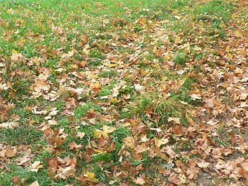 Melír v trávě