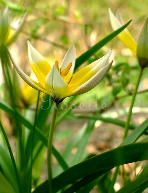 Co roste v trávě ... - autorská fotografie
