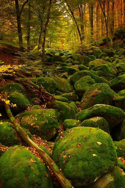 Podzim ve Vlčí rokli