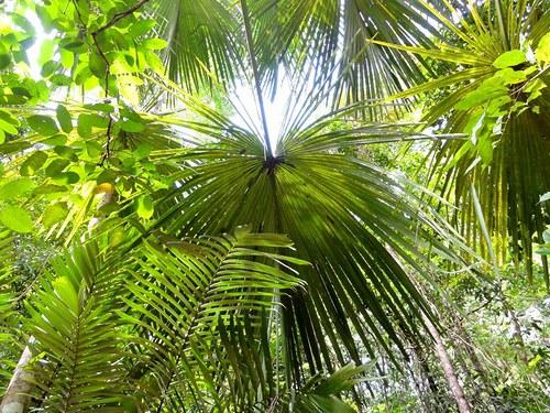 Tropické nebíčko