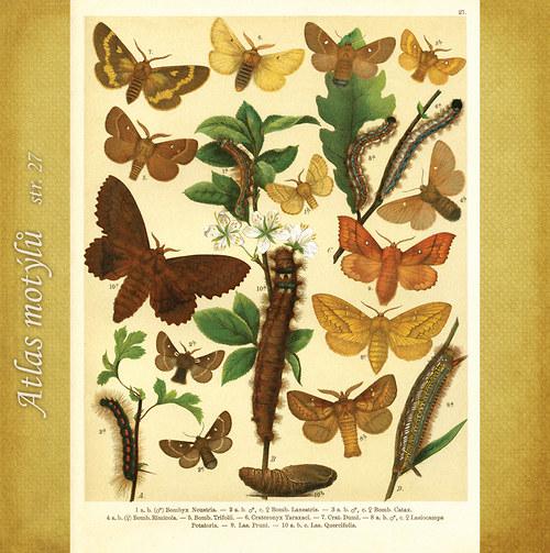 Motýli - str. 27 - formát A4