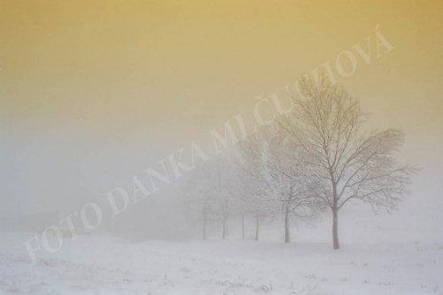 Fotografie : zimní krajinka