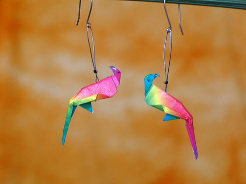 Papoušci z Patagonie