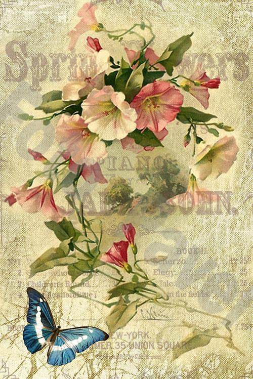 Vintage motiv - květiny s motýlkem