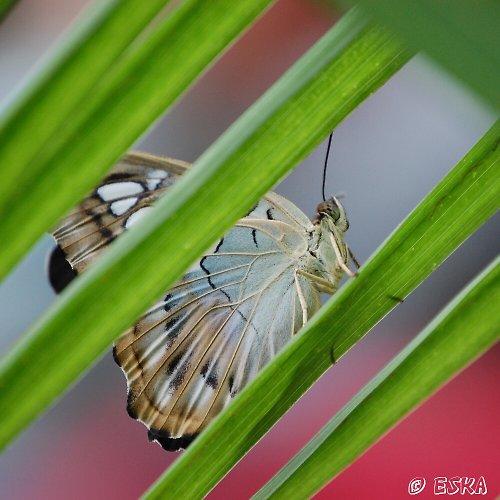 motýl - fotografie