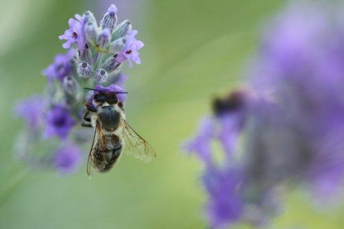 Ze života včelky