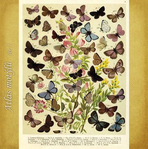 Motýli - str. 7 - formát A4