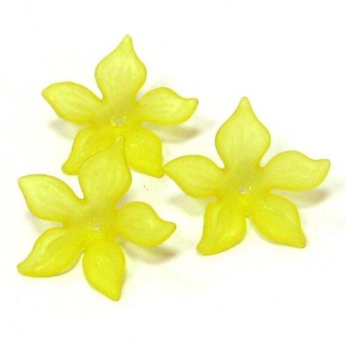 Květ velký žlutý