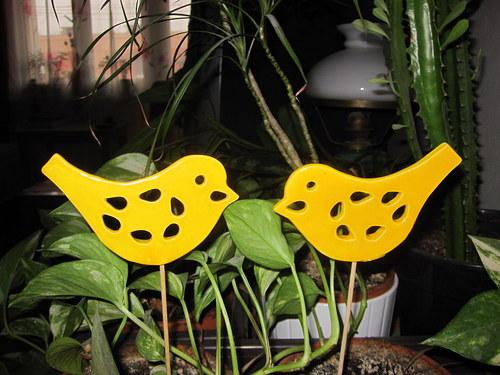 žlutý jarní ptáček