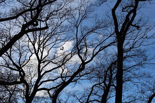 Dvě hrdličky ve větvích...přílétly nebo odlétly...