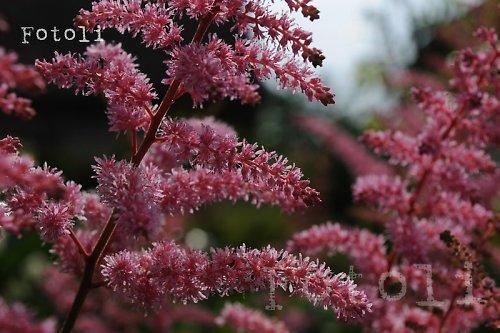 Něco na zahrádce :) co krásně kvete...