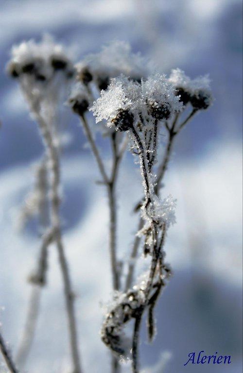 """Zasněžené krásky\"""""""
