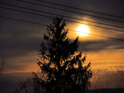 Rozhovor stromu a slunce