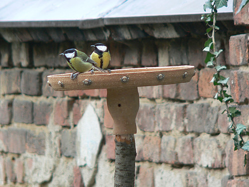 Pítko pro ptáčky cca 25 cm