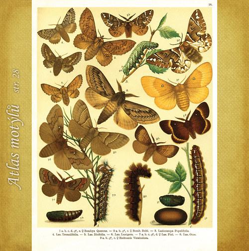Motýli - str. 28 - formát A4