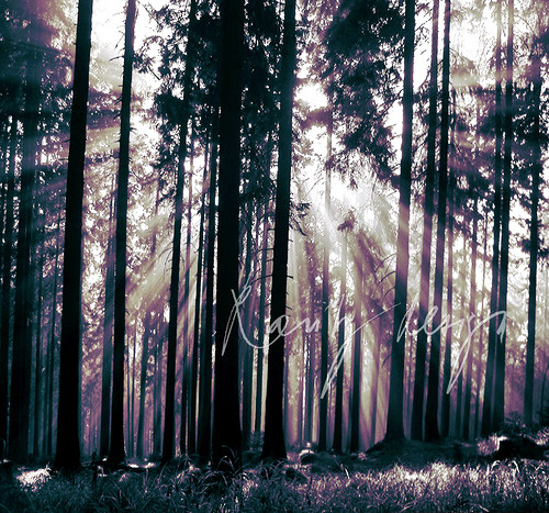 Sun in forest.. IV.