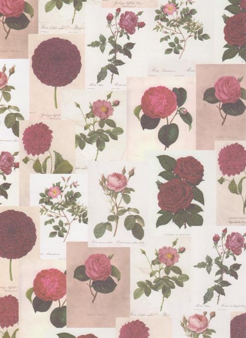Čtvrtka A4 Botanicals - Růže (1 ks)