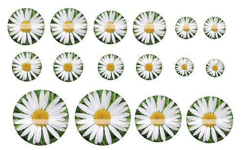 Návrh na pryskyřici - Květiny č.5