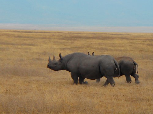 Kráter Ngorongoro - matka s dcerou