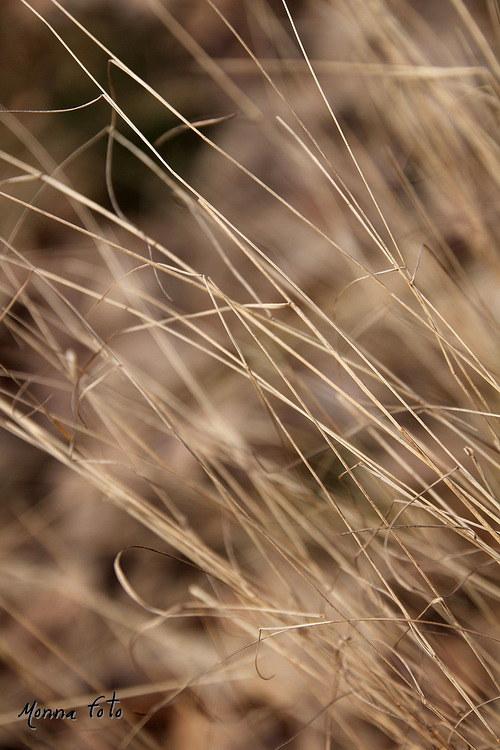 Polož mě do trávy