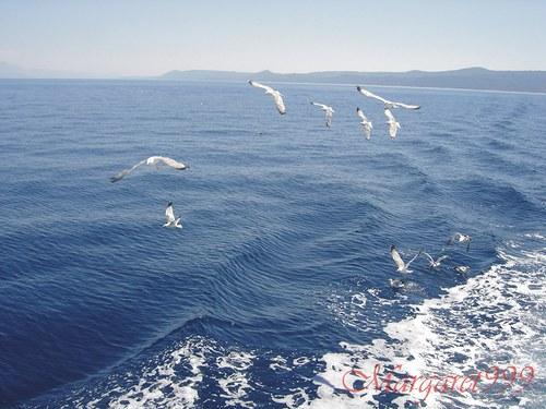 Plavba po moři