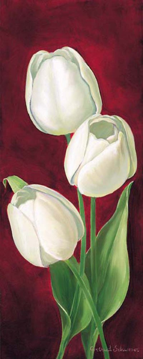 Reprodukce - tisk - Bílý tulipán 10x25cm-0260A