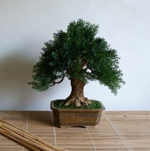 Umělá bonsaj s kmenem z recyklovaného papíru