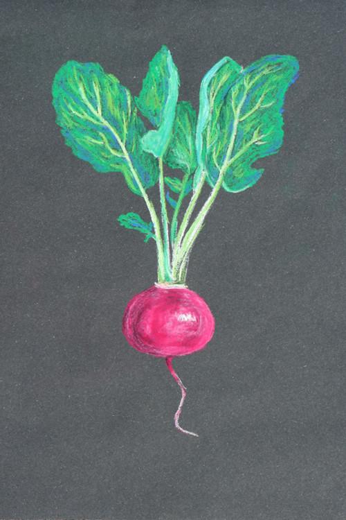 Kořenová zelenina – Ředkvička