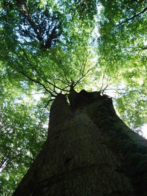 V tichu lesním ...