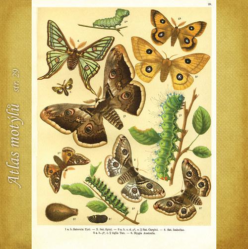 Motýli - str. 29 - formát A4