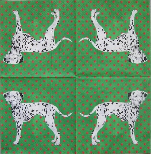 Dalmatin na zelenémč.1630