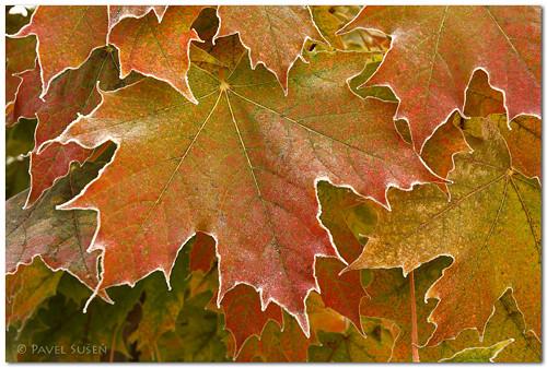 Podzimní mrazík