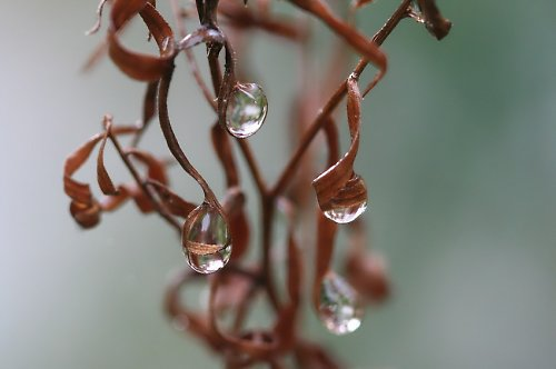Šperk vytvořený přírodou