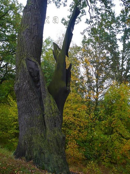 Zakletý strom