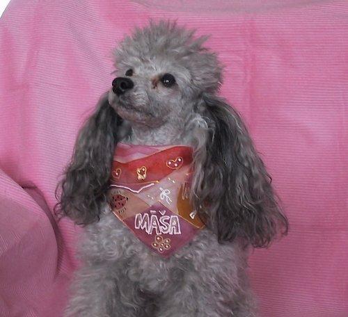 Šáteček pro psí slečnu -růžovo-oranžový