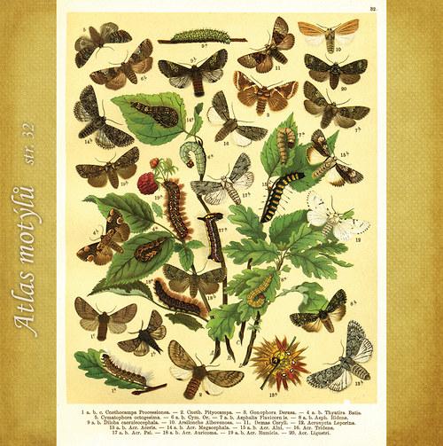 Motýli - str. 32 - formát A4