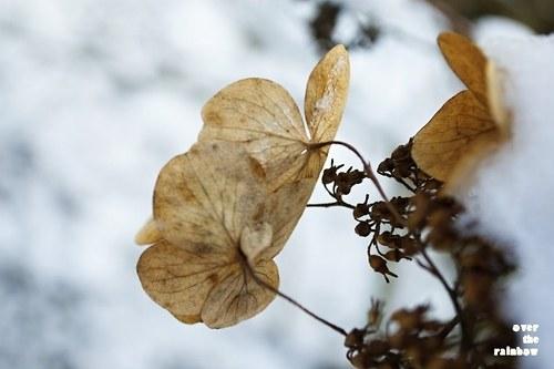 Winter Impressions VII - autorská fotografie