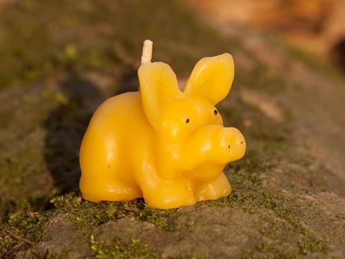 Svíčka ze včelího vosku - zlaté prasátko