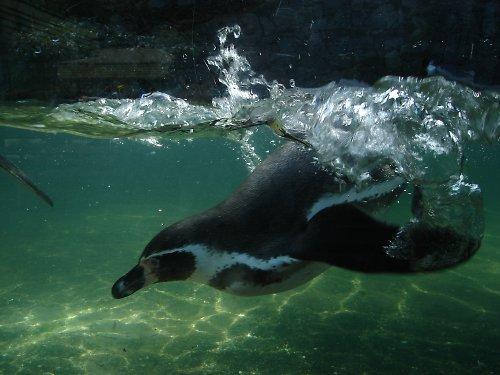 Jak zajedu pod vodu ...