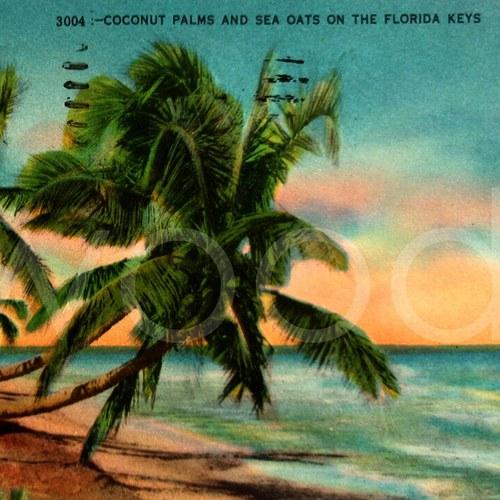 FLORIDA - pohlednice č. 1261