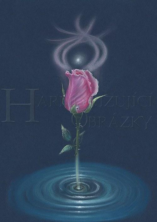 Zrození růže A5