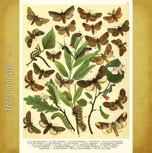 Motýli - str. 31 - formát A4