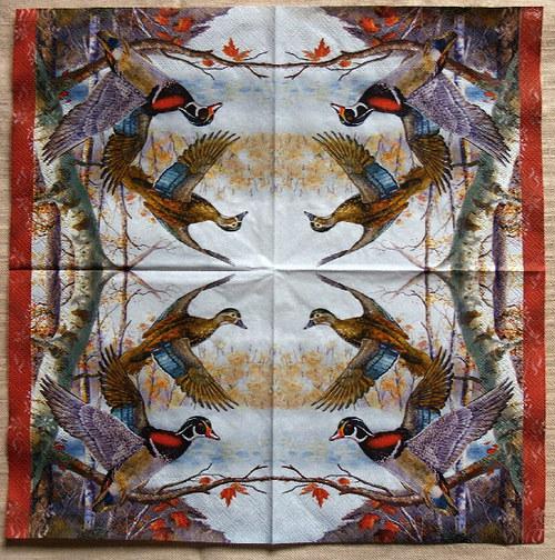 U417 ptáci