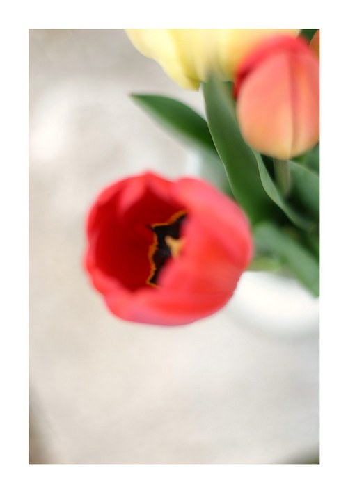 Tuli tuli tulipán