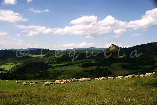 Pozdravy ze Slovenska