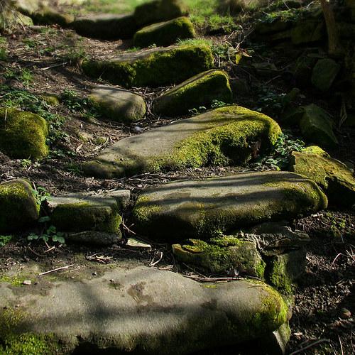 "Fotografie \""Mechové schody\"""