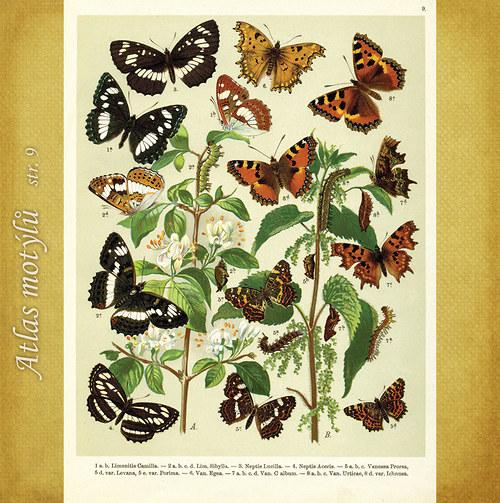 Motýli - str. 9 - formát A4